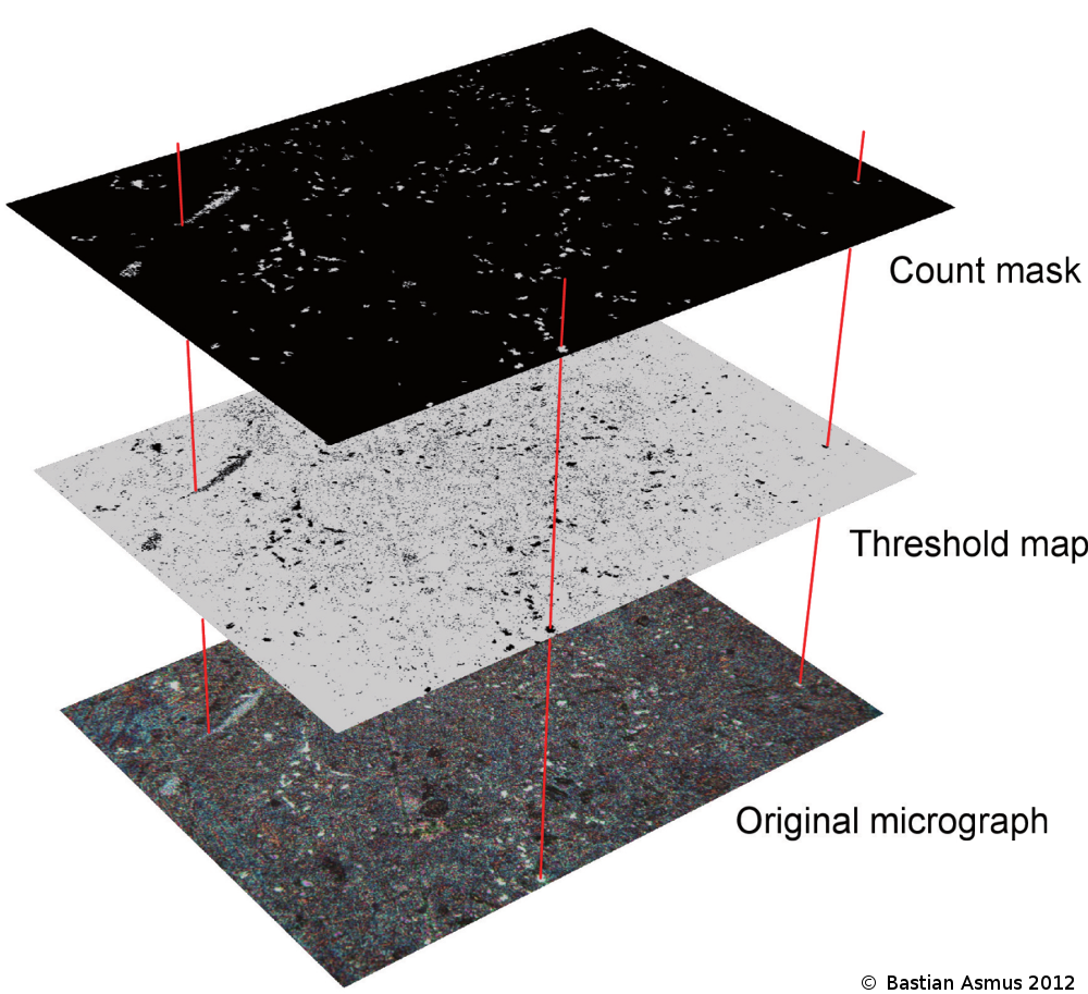 Schema of the quanitfication process with the digitial image processing software imagej.